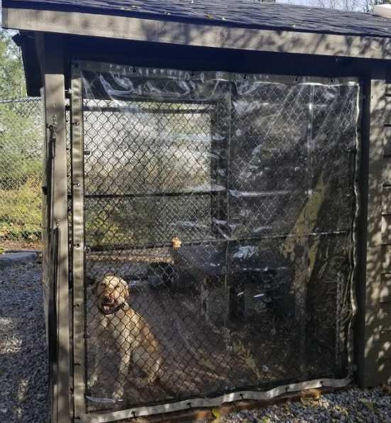 Dog kennel with clear vinyl cover